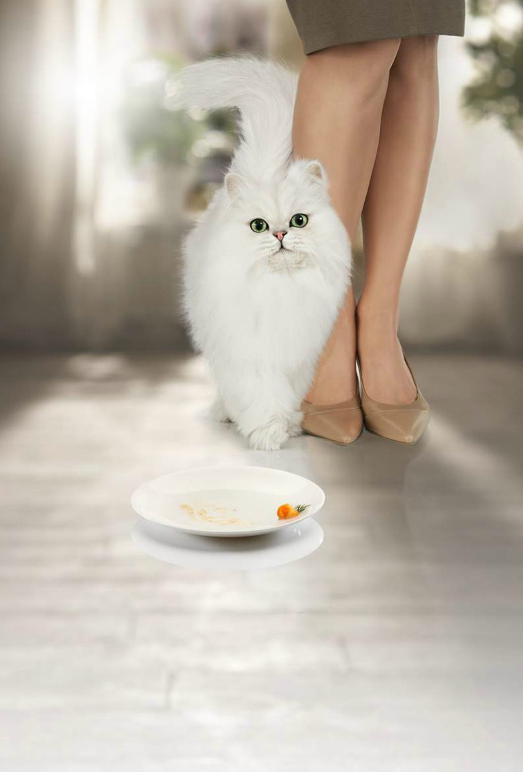 White Persian passing legs having eaten cat food Purina Petcare McCann Erickson Moscow