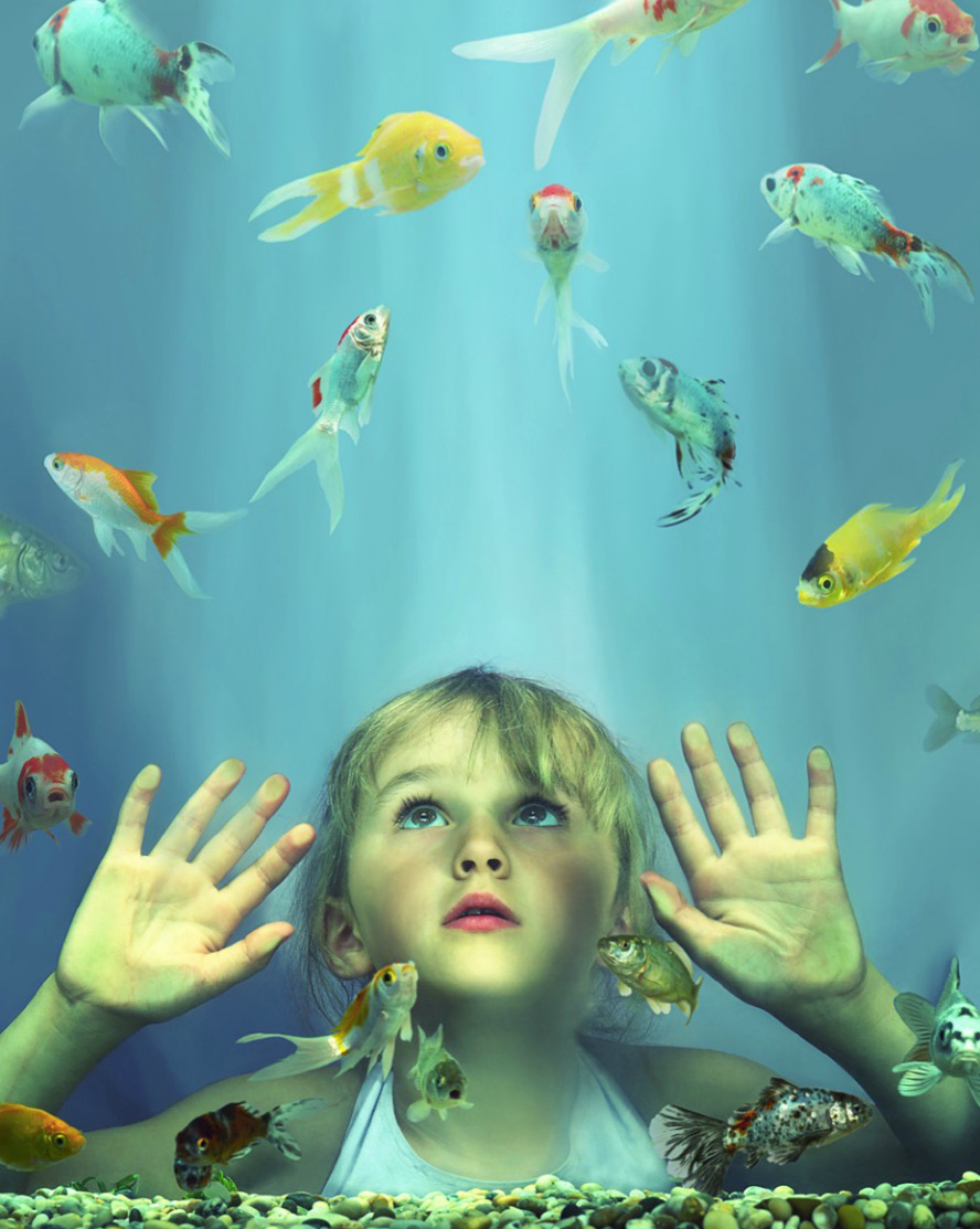 Girl (4-6) looking at fish in tank, hands pressed against glass Copyright Gandee Vasan