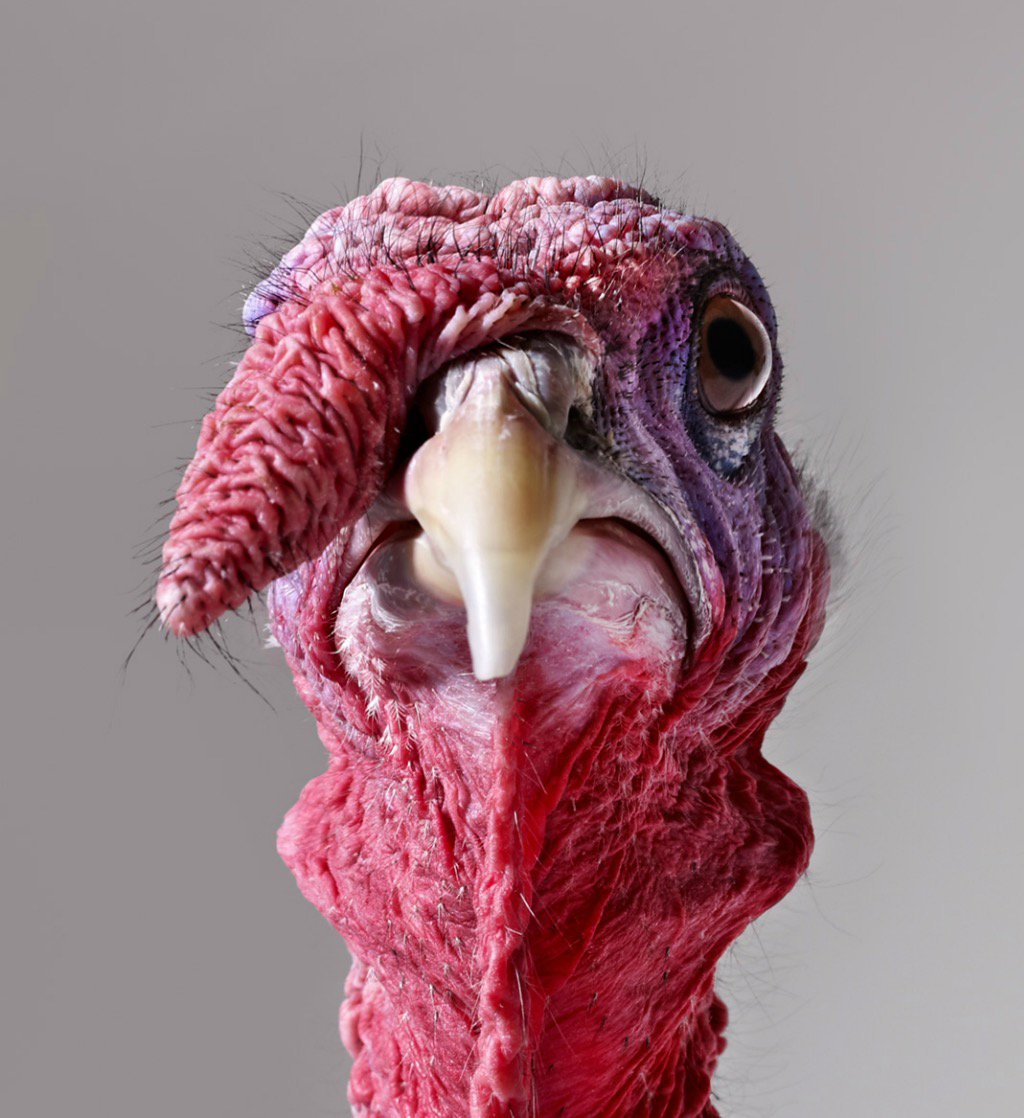 Portrait of Turkey Copyright Gandee Vasan
