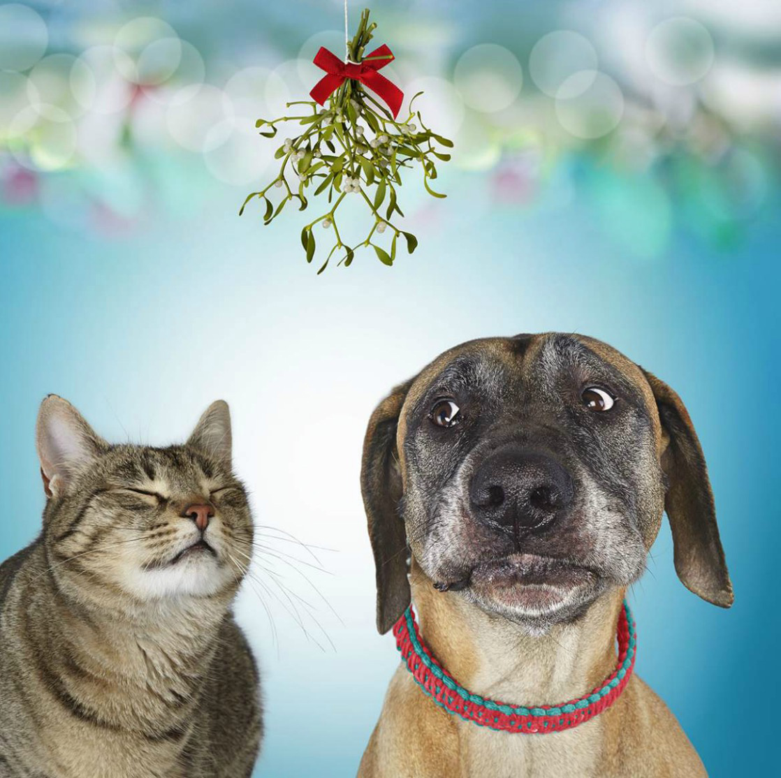 Meet Me Under the Mistletoe Dog and cat under Mistletoe Copyright Gandee Vasan