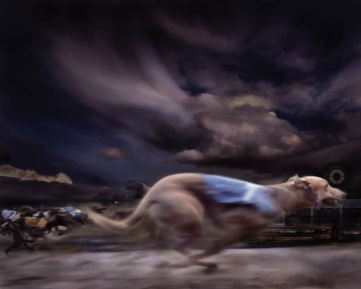 Greyhound racing, winner passing post (blurred motion) Latin name for all domestic dogs is Canis familiaris. Copyright Gandee Vasan